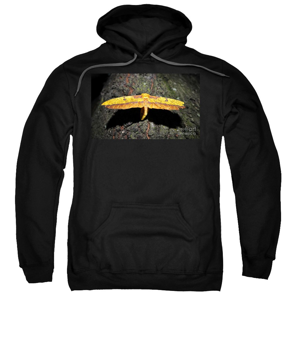 Imperial Moth Sweatshirt featuring the photograph Imperial Night by David Lee Thompson
