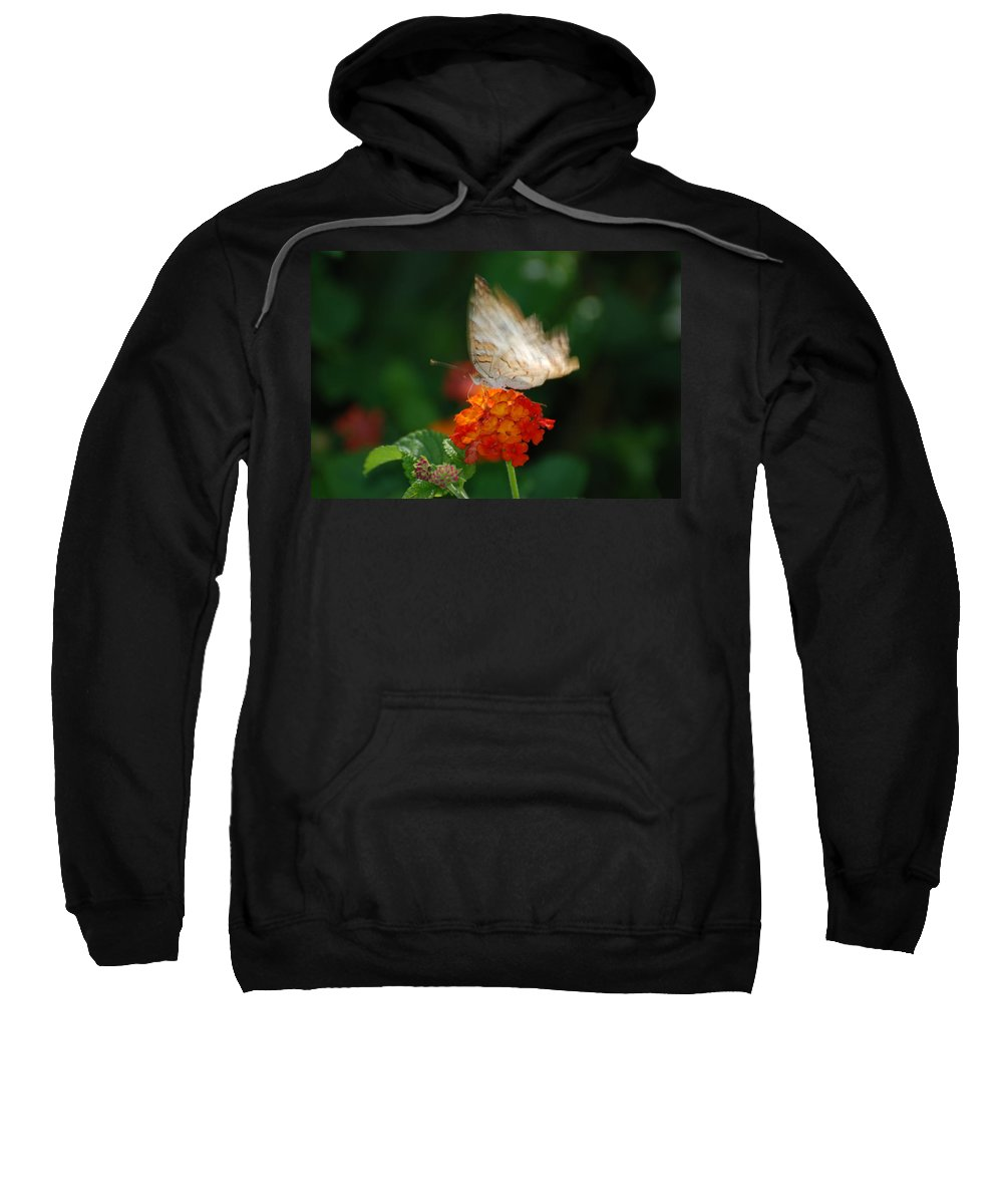 Butterfly Sweatshirt featuring the photograph In Living Color by Rob Hans