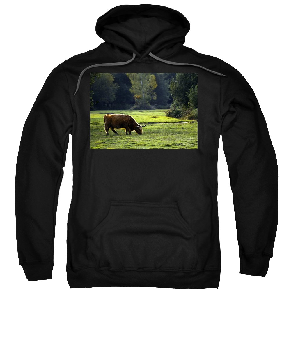 Heilan Coo Sweatshirt featuring the photograph in New Forest by Angel Ciesniarska