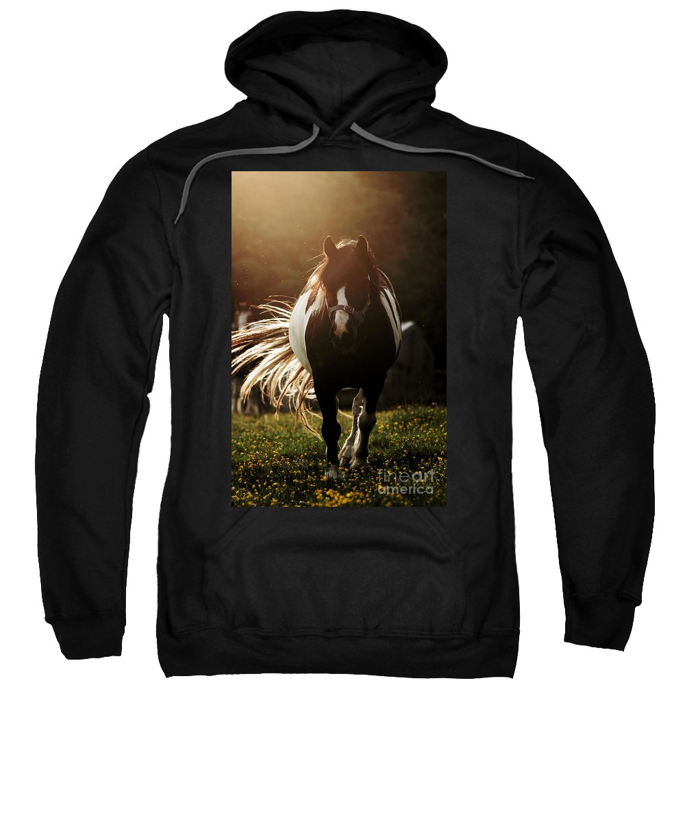 Horse Sweatshirt featuring the photograph In The Last Rays Of Setting Sun by Angel Ciesniarska