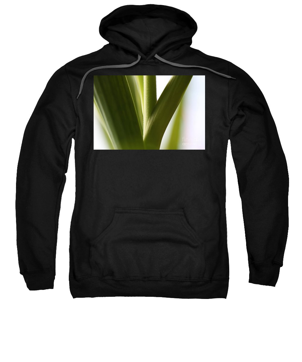 Leaves Sweatshirt featuring the photograph In The Spotlight Of Support by Amanda Barcon