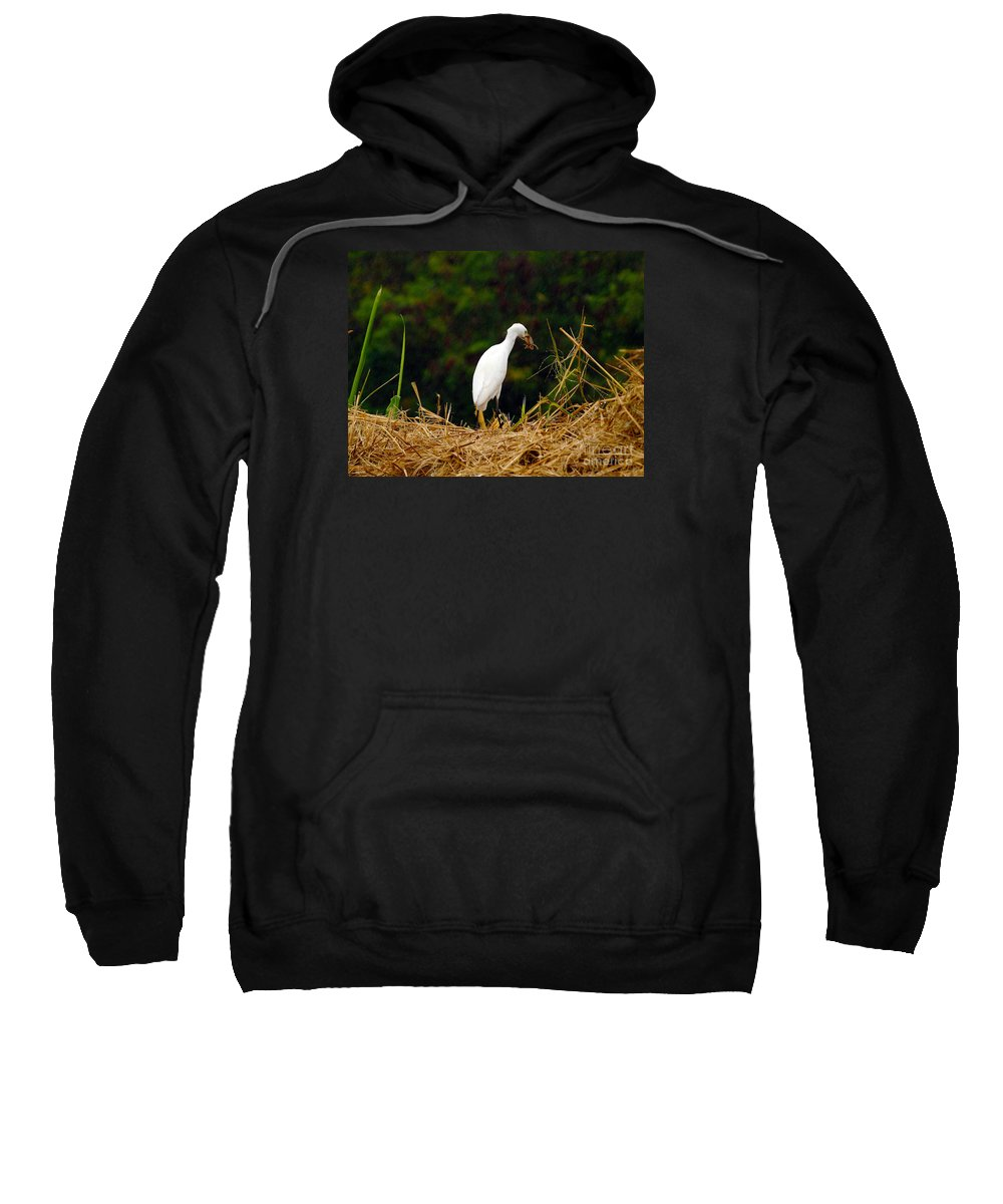 Fine Art Photography Sweatshirt featuring the photograph It Was A Bad Day For Bats II by Patricia Griffin Brett