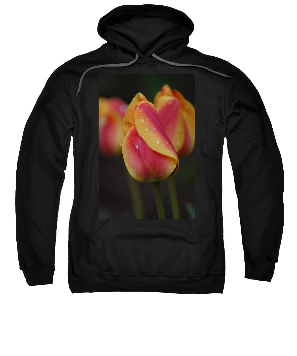 Flowers Sweatshirt featuring the photograph Its Hot by Donna Bentley