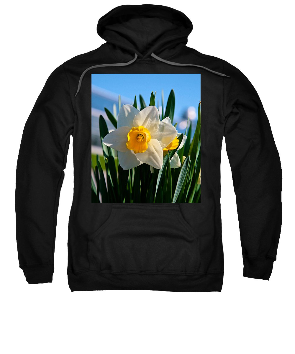 Plant Sweatshirt featuring the photograph Its Spring by Robert Pearson