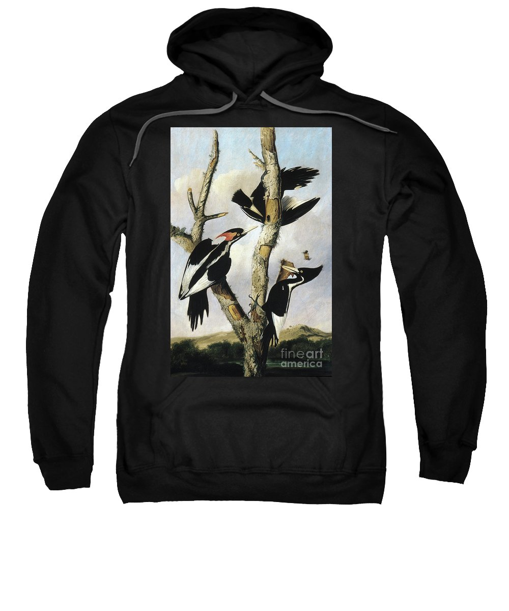 1820 Sweatshirt featuring the photograph Ivory-billed Woodpeckers by Granger