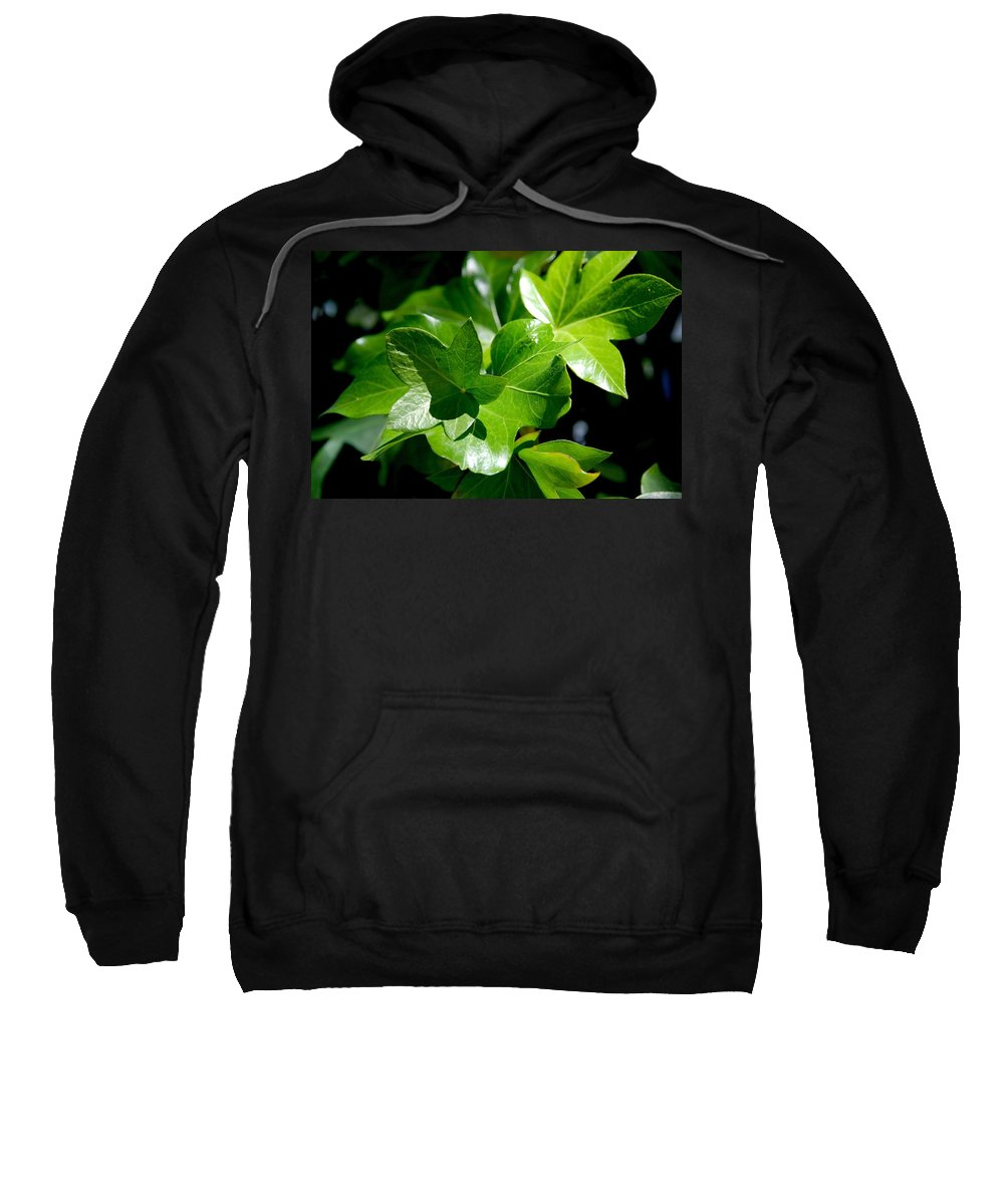 Photography Sweatshirt featuring the photograph Ivy In Sunlight by Susanne Van Hulst