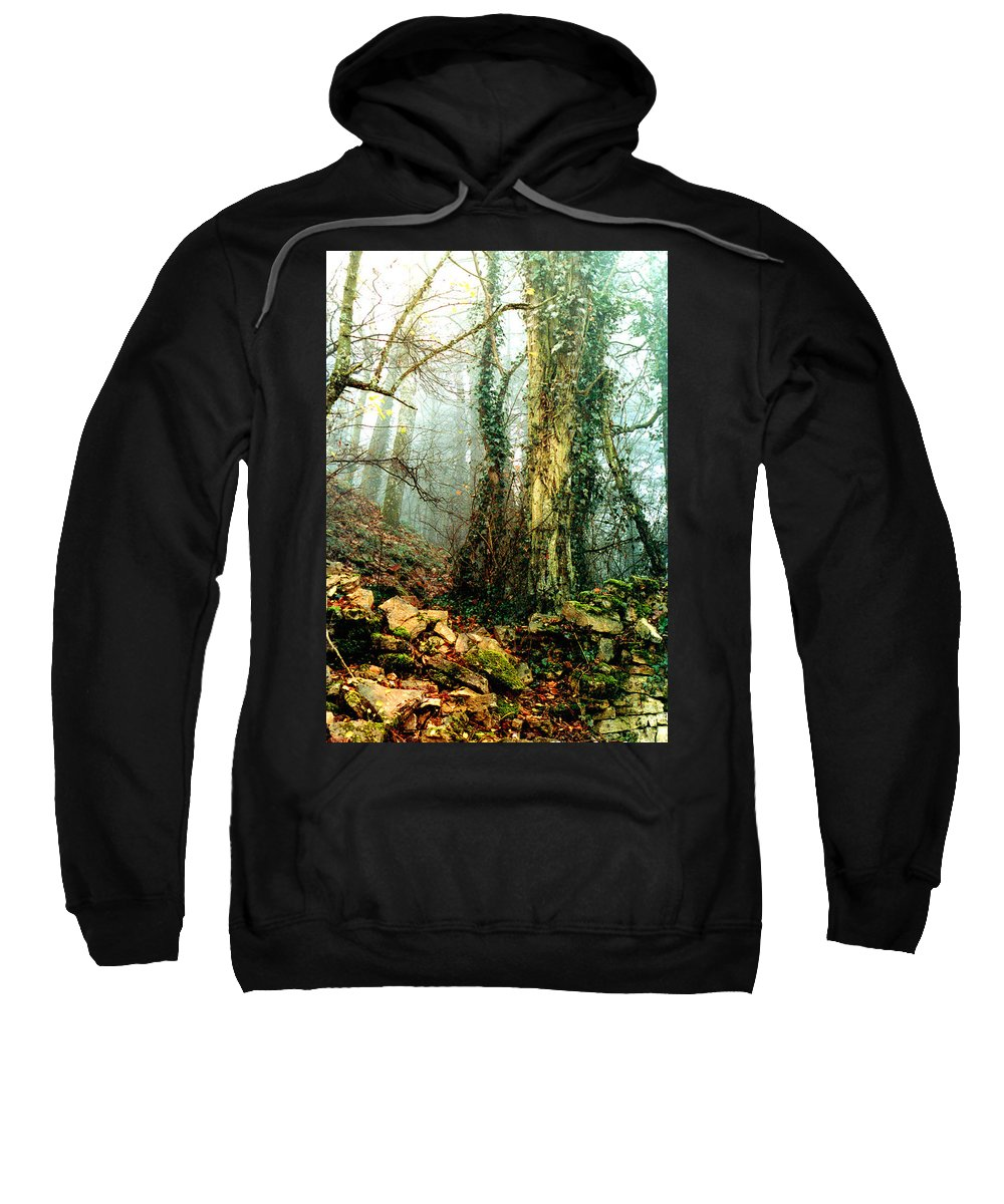 Ivy Sweatshirt featuring the photograph Ivy In The Woods by Nancy Mueller