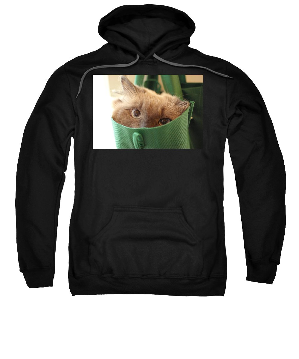 Cat Sweatshirt featuring the photograph Jack In The Bag by Cindy Johnston