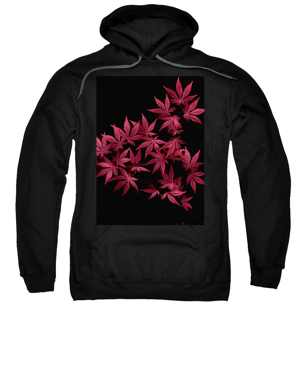 Japanese Maple Sweatshirt featuring the photograph Japanese Maple Leaves by Wayne Potrafka