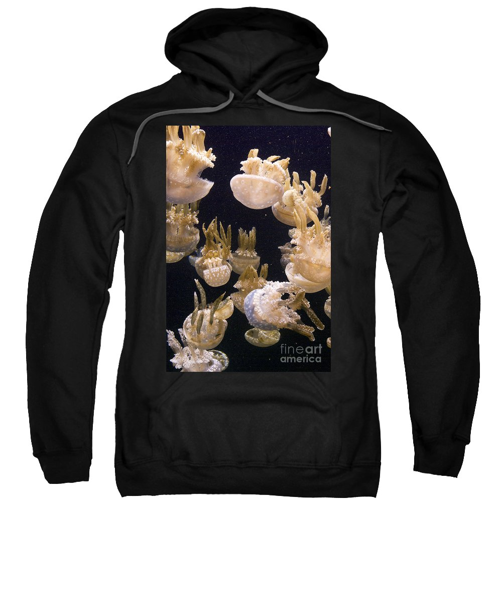 Jellyfish Sweatshirt featuring the photograph Jelly Parade by Jim And Emily Bush