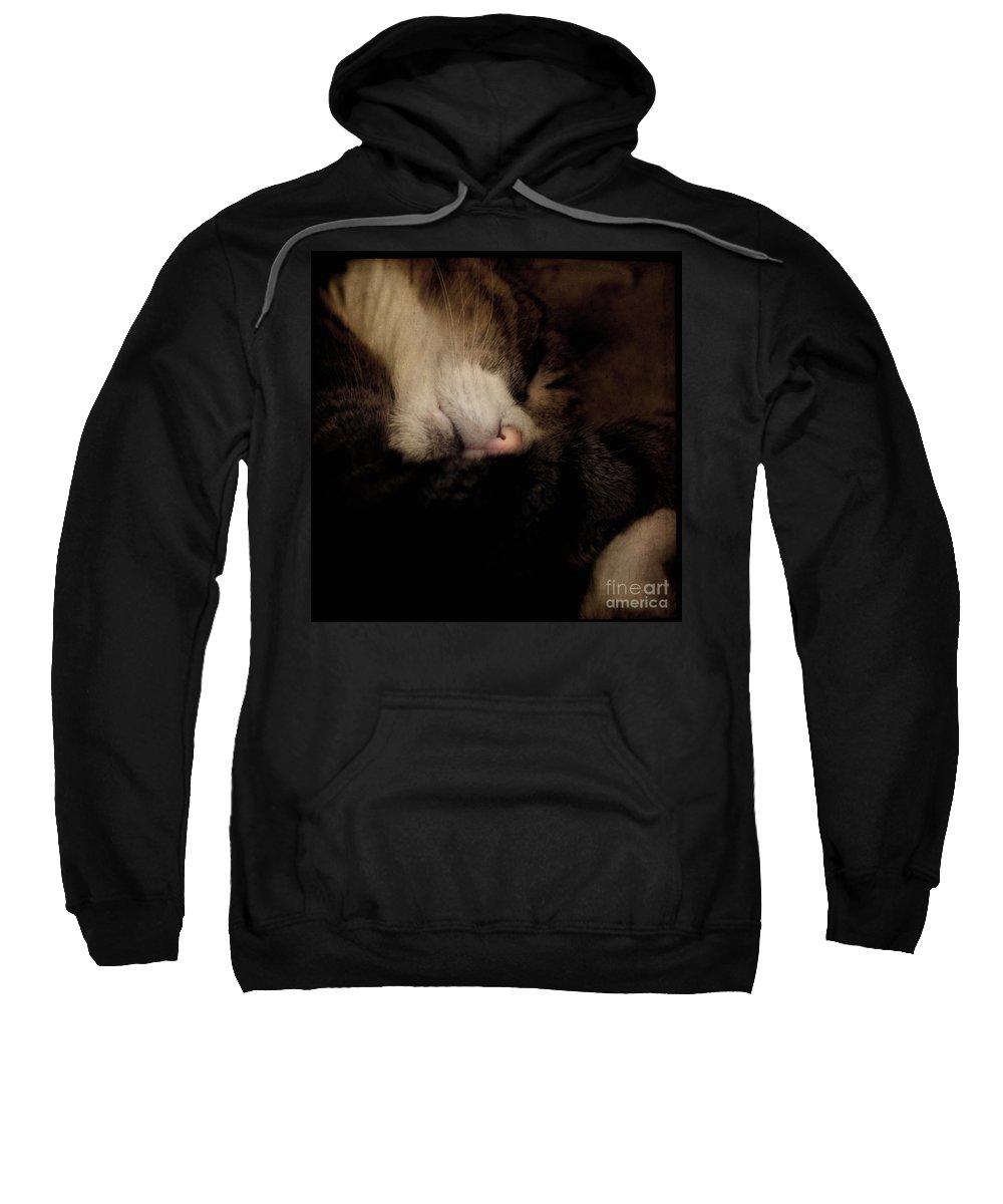 Cat Sweatshirt featuring the photograph Just Sleep by Angel Ciesniarska