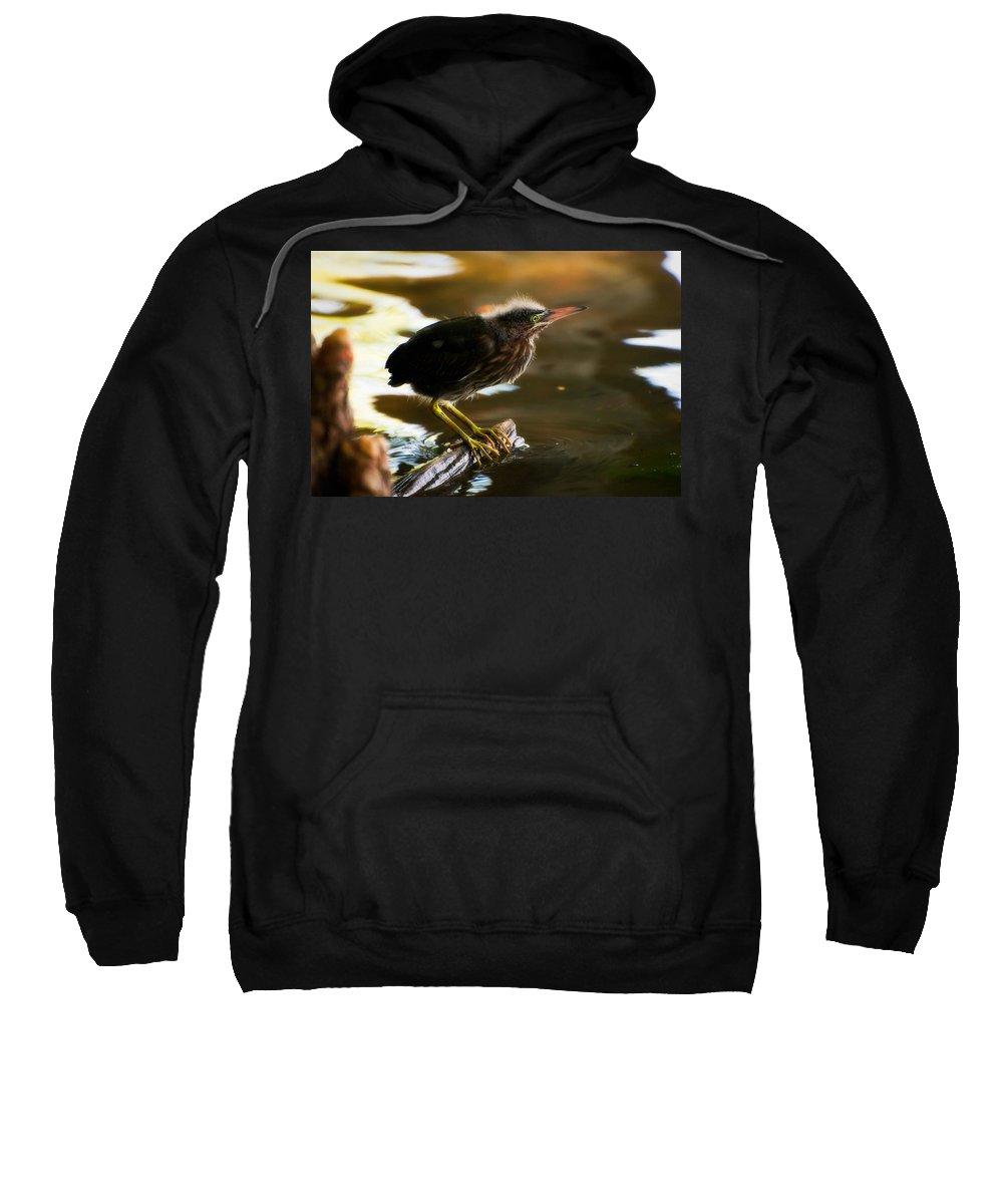Animal Sweatshirt featuring the photograph Juvenile Green Heron by Rich Leighton
