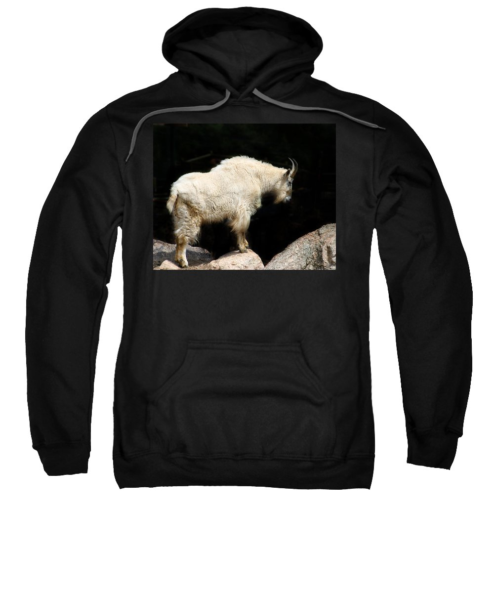 Wildlife Sweatshirt featuring the photograph King Of The Mountain by Anthony Jones