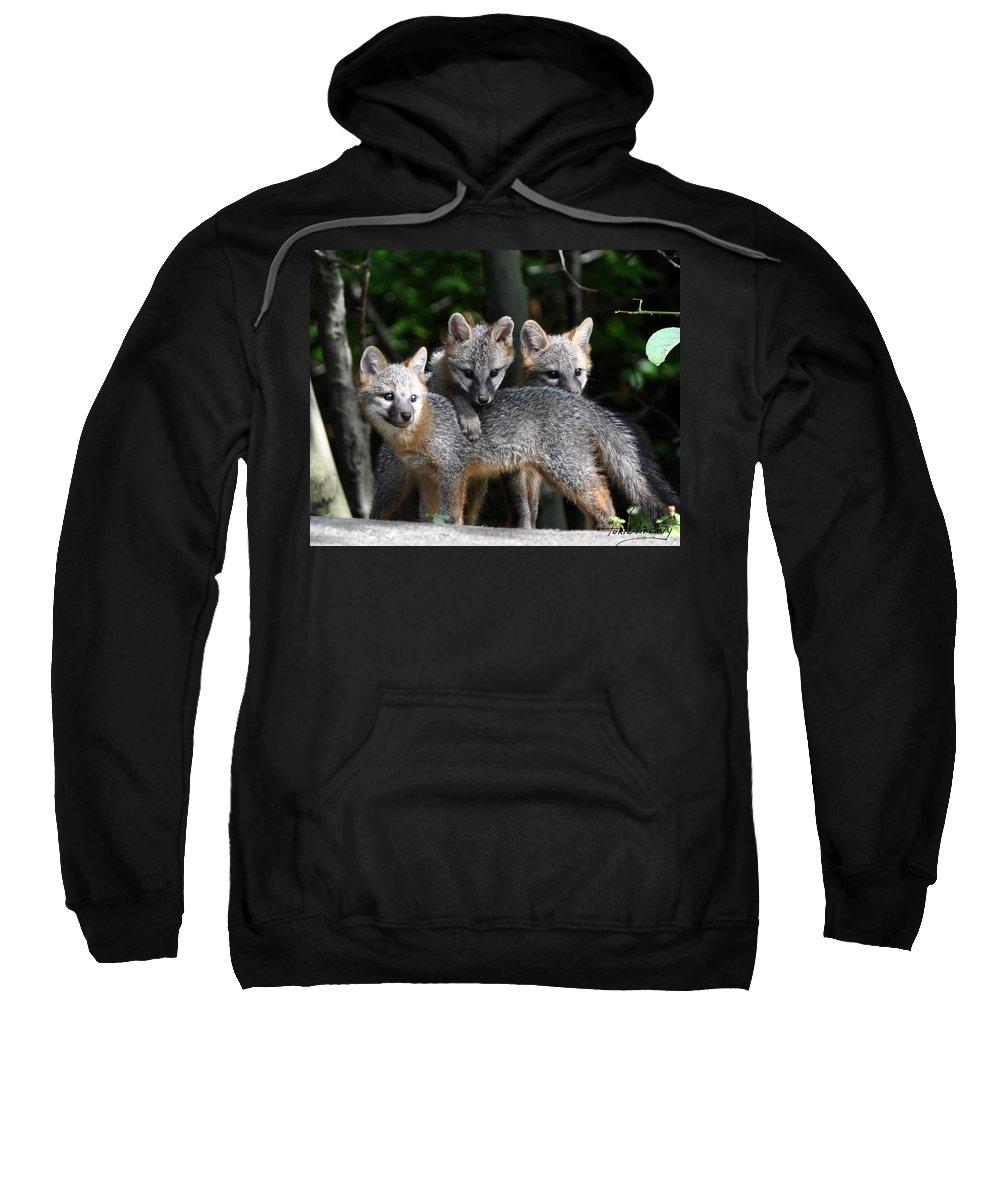 Kit Fox Sweatshirt featuring the photograph Kit Fox10 by Torie Tiffany