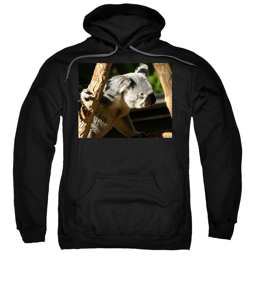 Zoo Sweatshirt featuring the photograph Koala Bear 2 by Anthony Jones