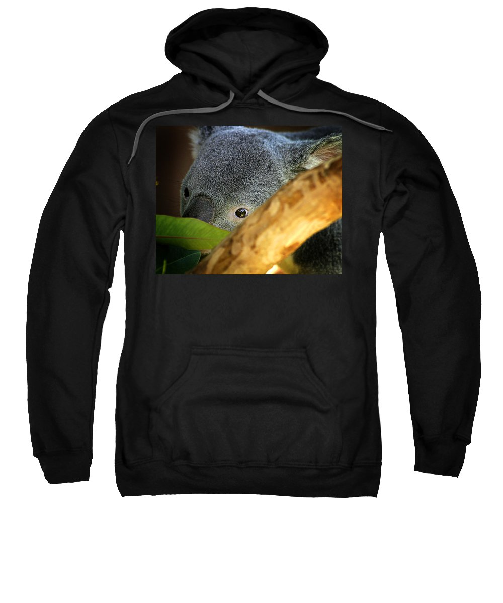Zoo Sweatshirt featuring the photograph Koala Bear by Anthony Jones