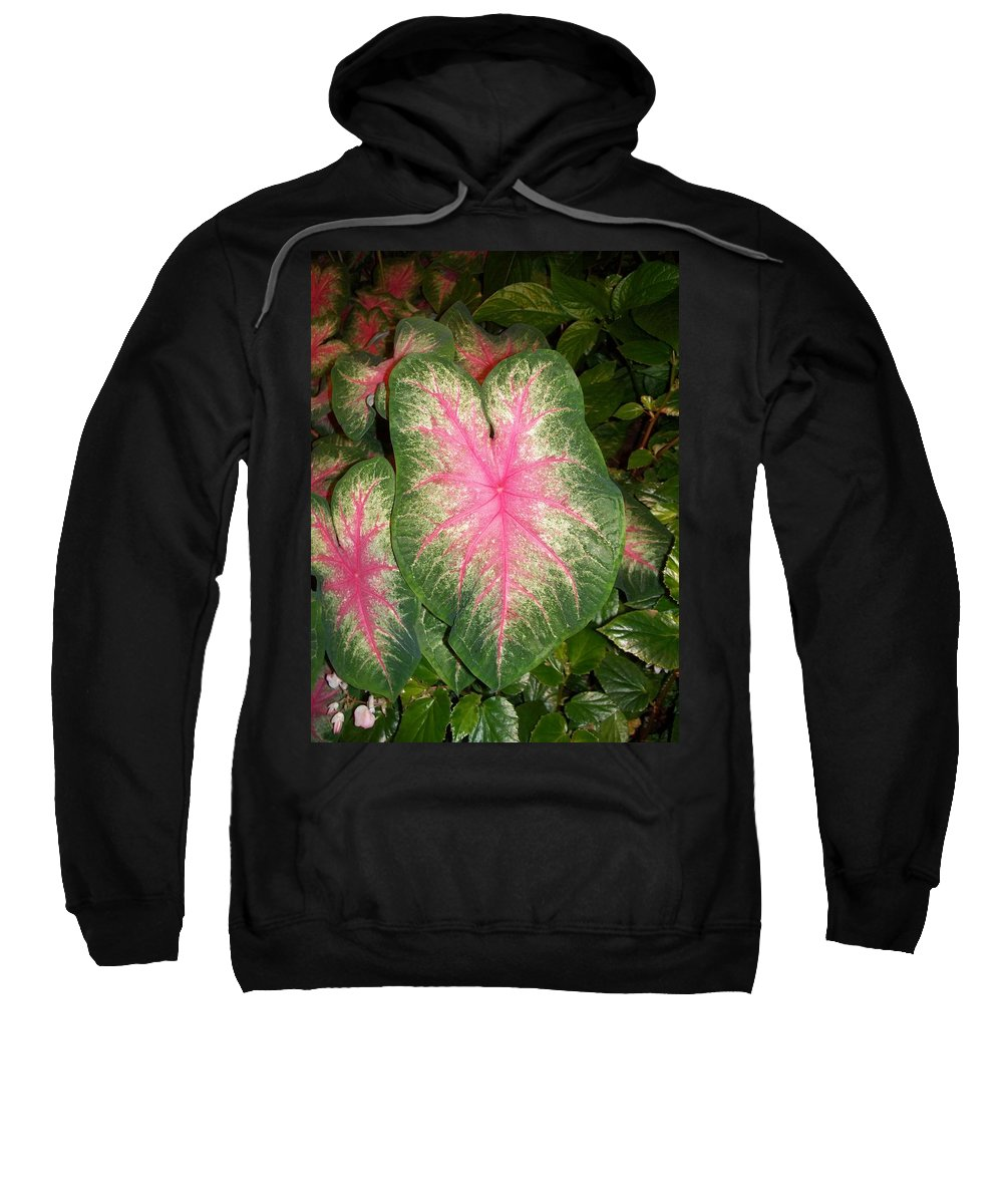 Nature Sweatshirt featuring the painting Large Coleus Plant by Eric Schiabor