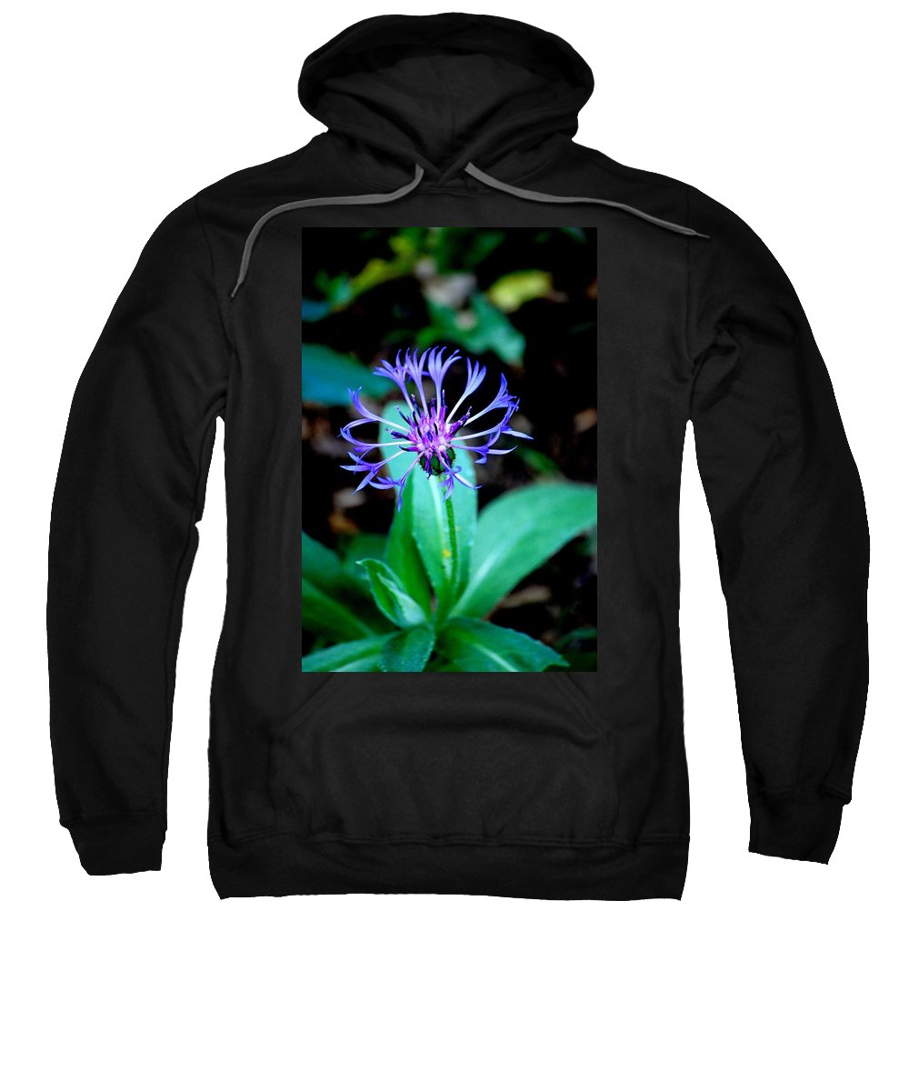 Digital Photograph Sweatshirt featuring the photograph Last Flower In The Garden by David Lane