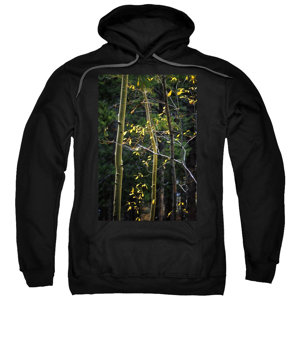 Aspen Sweatshirt featuring the photograph Late Aspen by Jerry McElroy