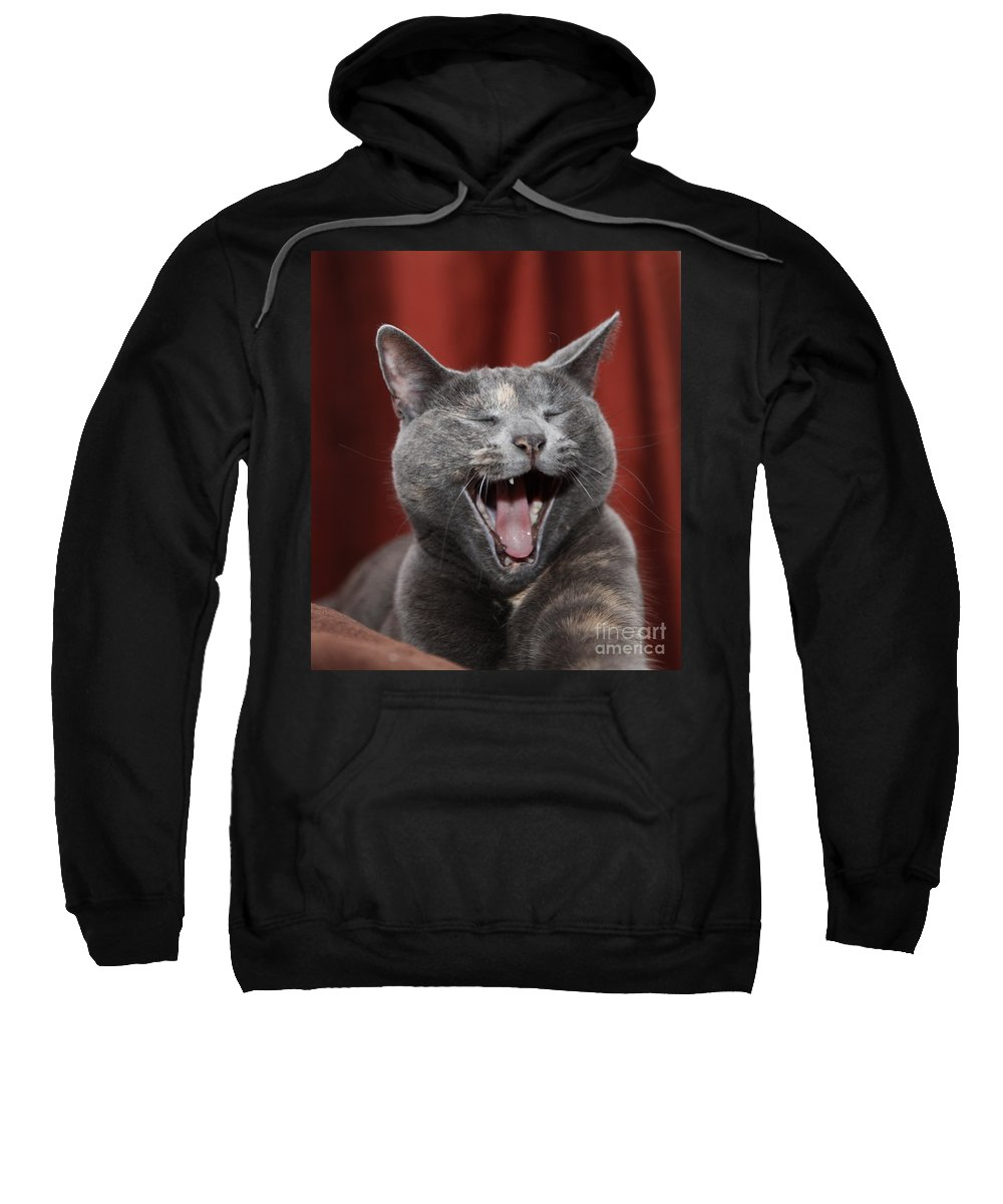 Kitty Sweatshirt featuring the photograph Laughing Kitty by Amanda Barcon