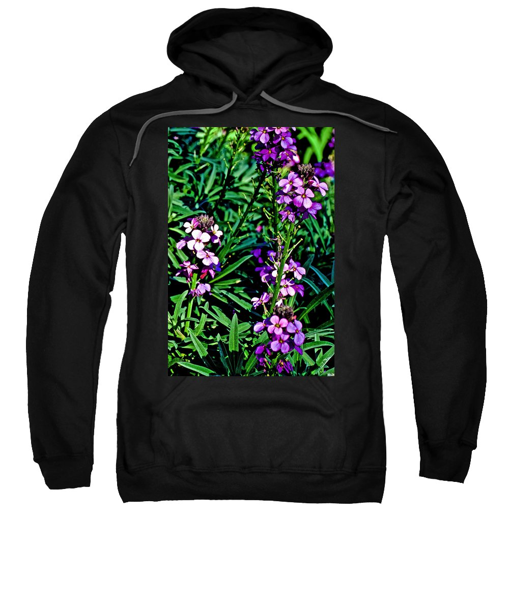 Verbena At Pilgrim Place In Claremont Sweatshirt featuring the photograph Verbena At Pilgrim Place In Claremont-california  by Ruth Hager