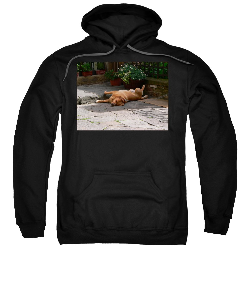 Dog Sweatshirt featuring the photograph Lazy Day by Angela Wright