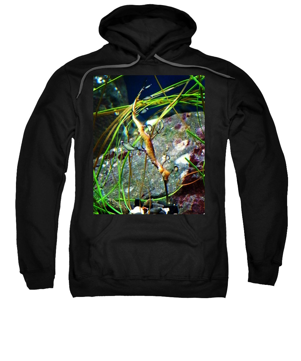 Paintings Sweatshirt featuring the photograph Leafy Sea Dragon by Anthony Jones