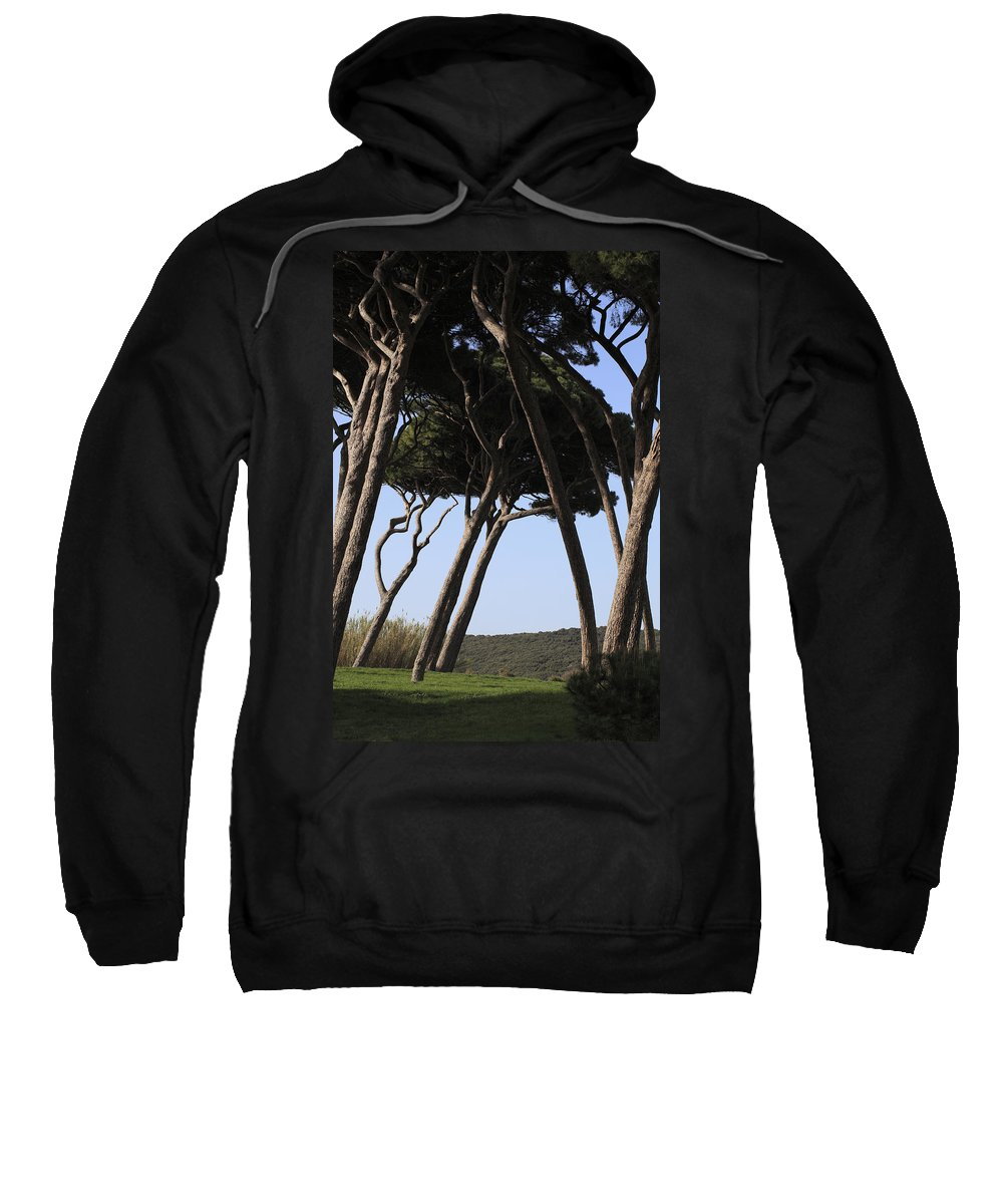 Beam Sweatshirt featuring the photograph Leaning Pine Trees by Stefania Levi
