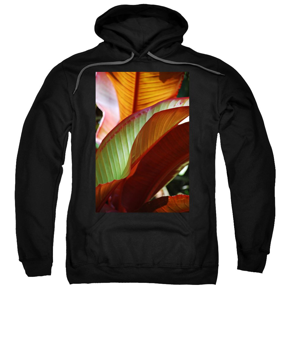 Leaves Sweatshirt featuring the photograph Leaves by Robert Meanor
