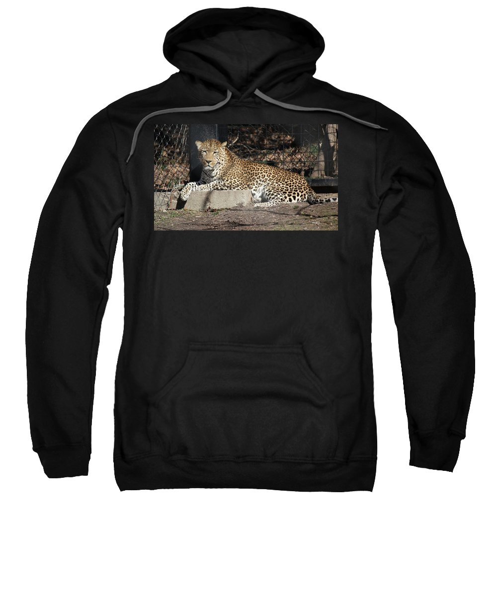 Maryland Sweatshirt featuring the photograph Leopard Relaxing by Ronald Reid