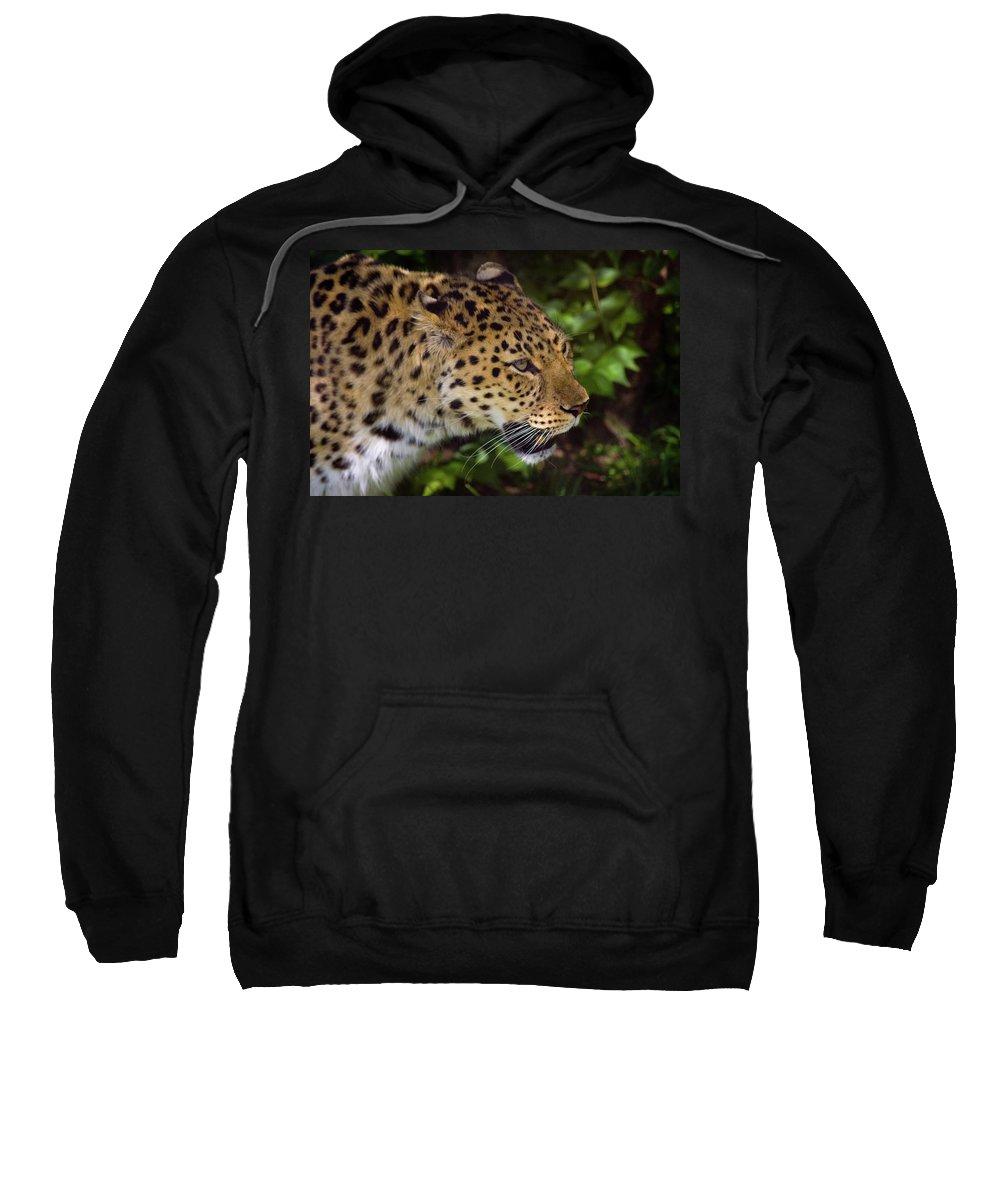 Leopard Sweatshirt featuring the photograph Leopard by Steve Stuller