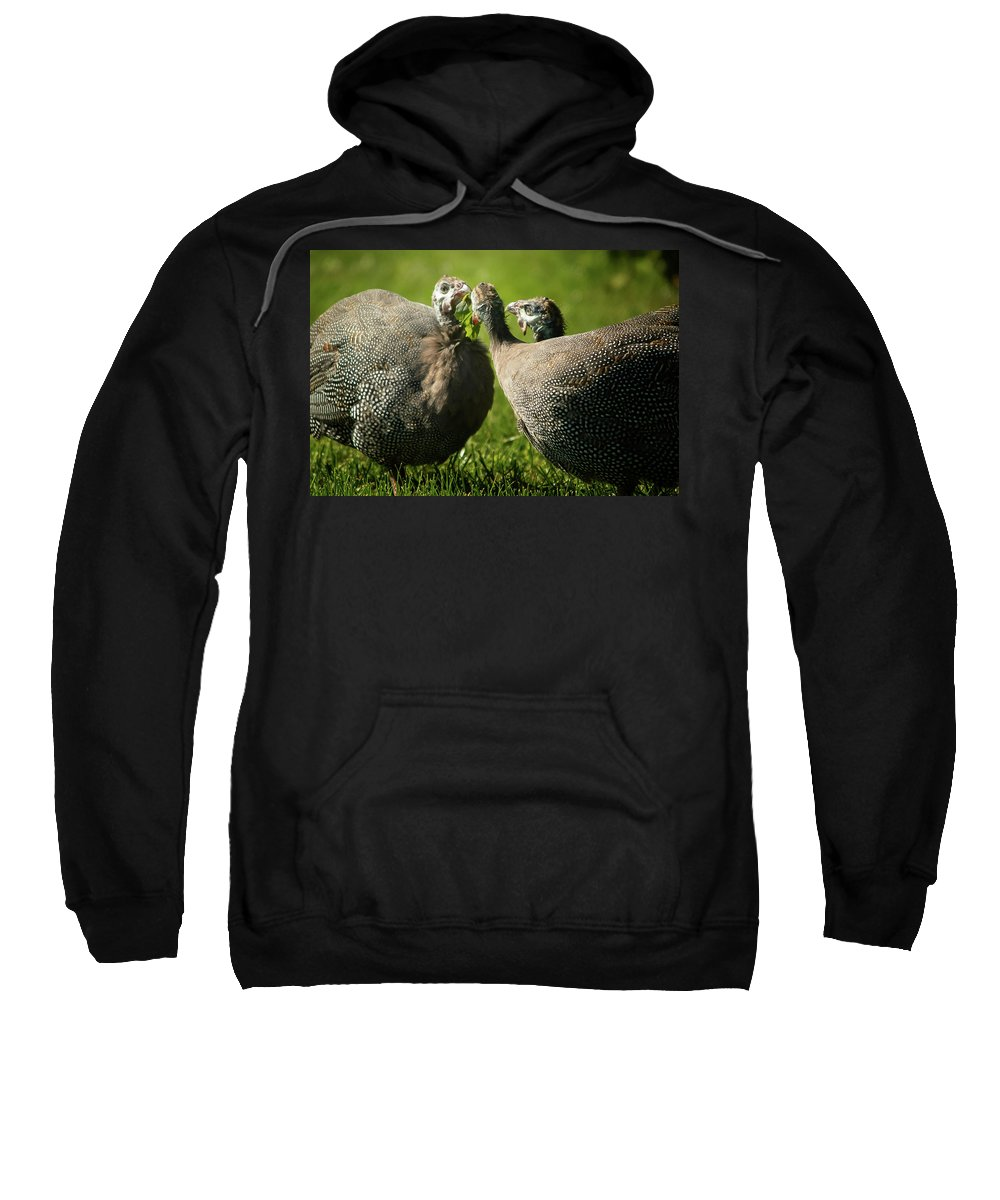 Guineas Sweatshirt featuring the photograph Let's Share by Gaby Swanson