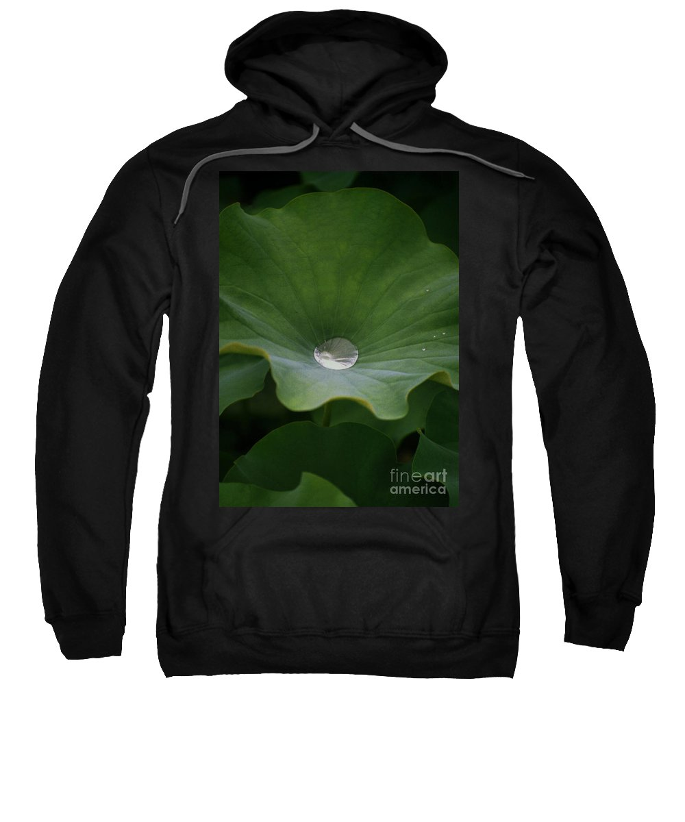 Plant Sweatshirt featuring the photograph Life by Richard Rizzo
