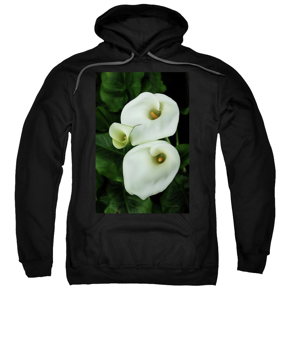 Calla Lily Sweatshirt featuring the photograph Lily Family by Donna Blackhall