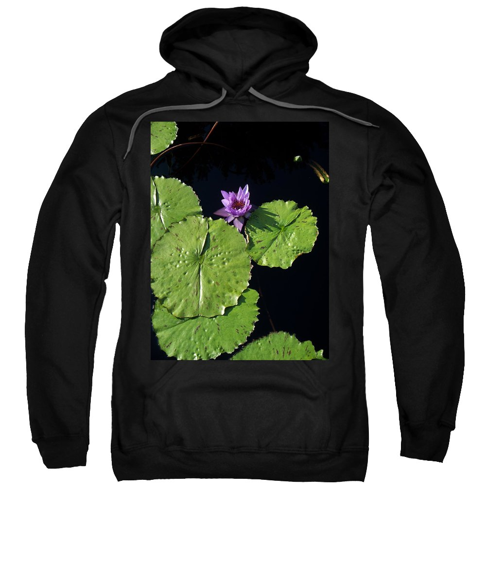 Water Lilies Sweatshirt featuring the painting Lily Pads From Above by Eric Schiabor