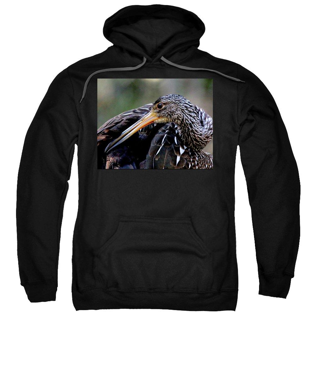 Birds Sweatshirt featuring the photograph Limpkin by Bibzie Priori