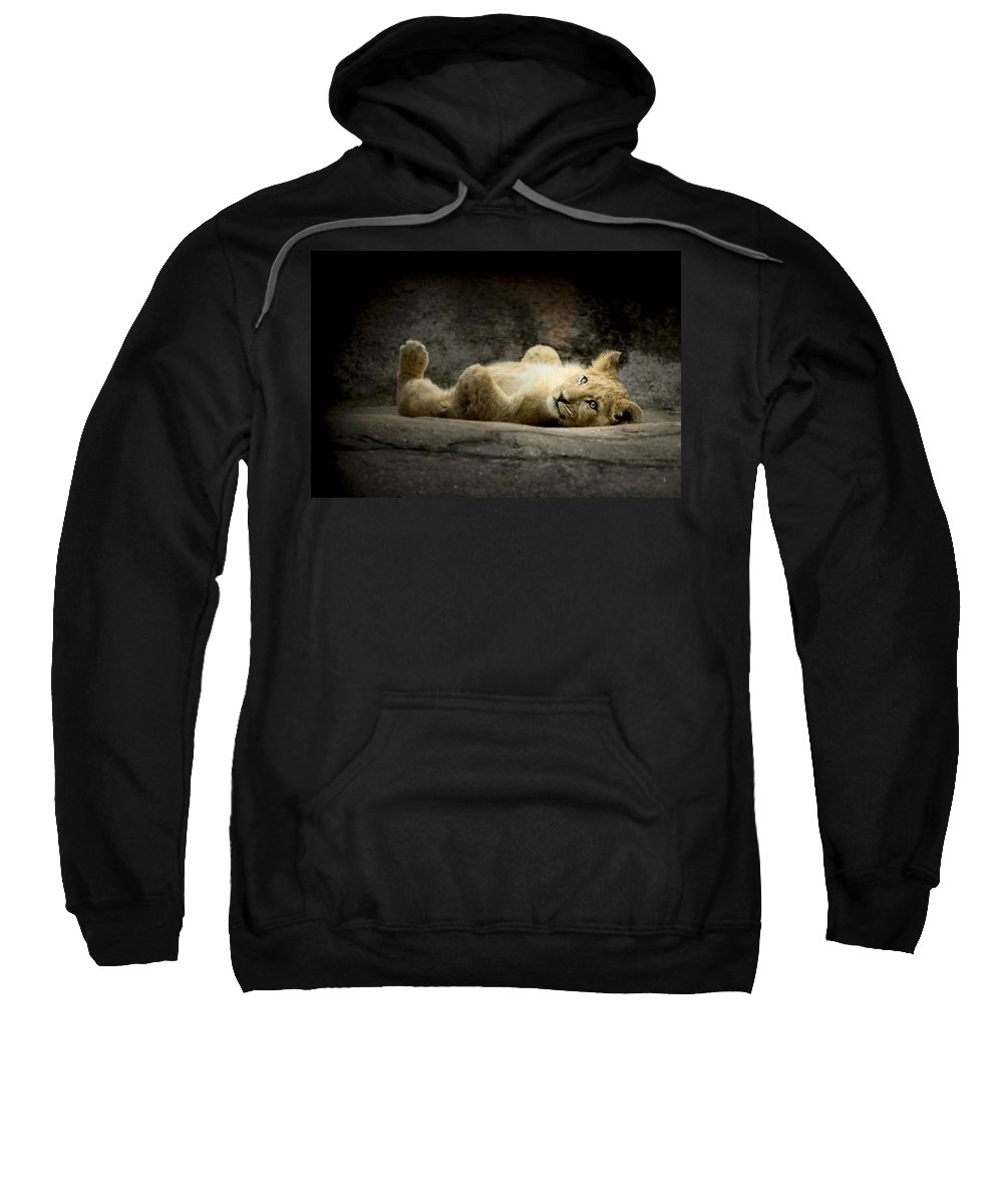 Africa Sweatshirt featuring the photograph Lion Cub by Linda D Lester