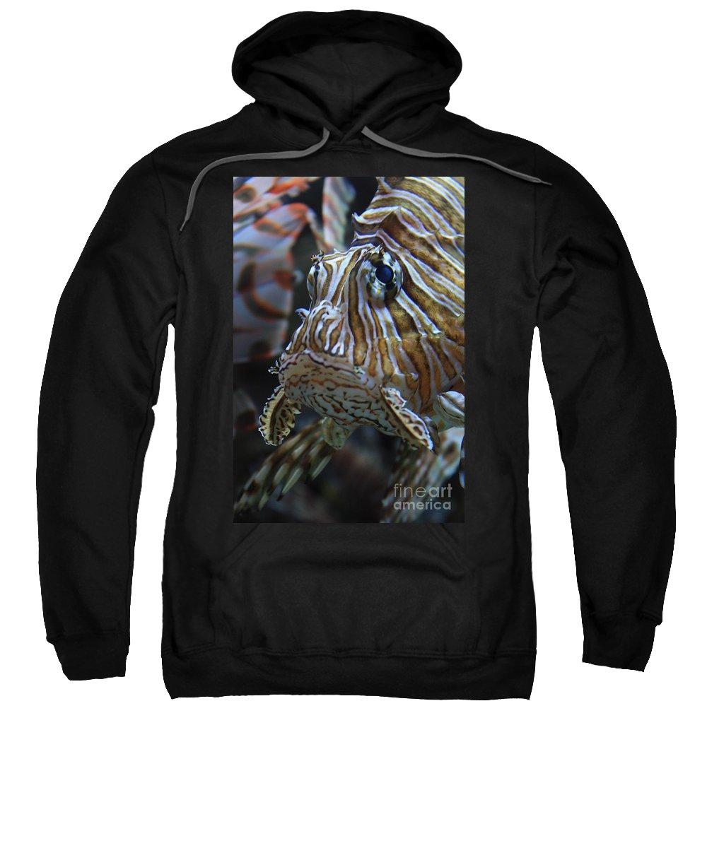 Fish Sweatshirt featuring the photograph Lion Fish Profile by Carol Groenen