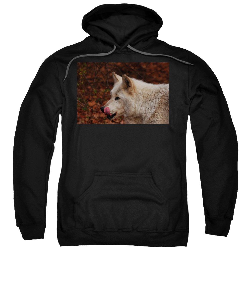 Wolf Sweatshirt featuring the photograph Lip Smacking Good by Lori Tambakis