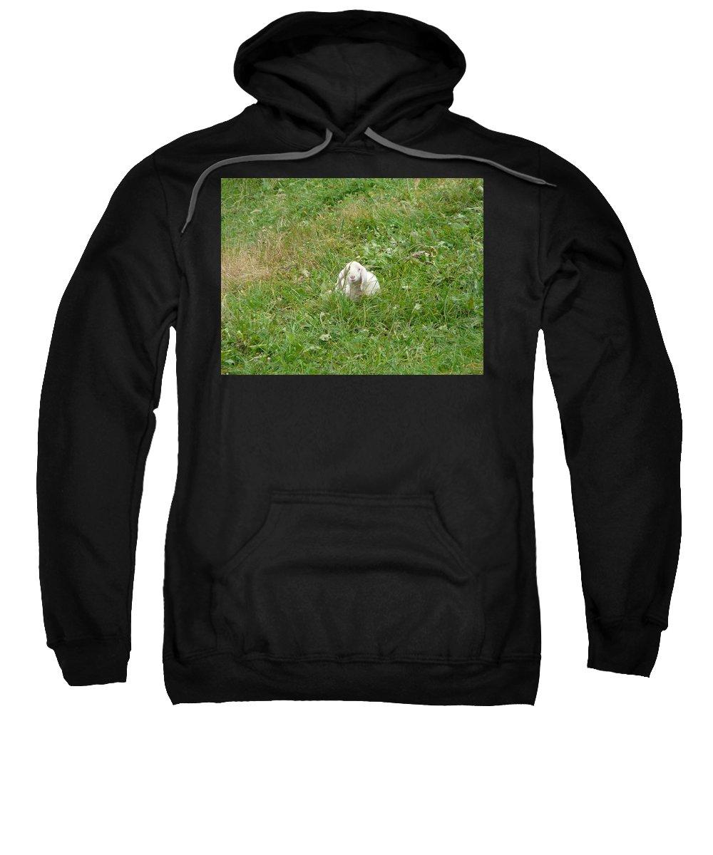 Lamb Sweatshirt featuring the photograph Little Lamb by Valerie Ornstein