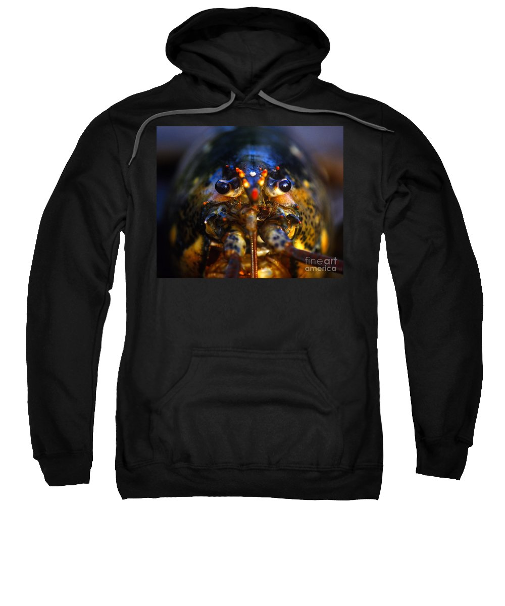 Animal Sweatshirt featuring the photograph Lobster by John Greim