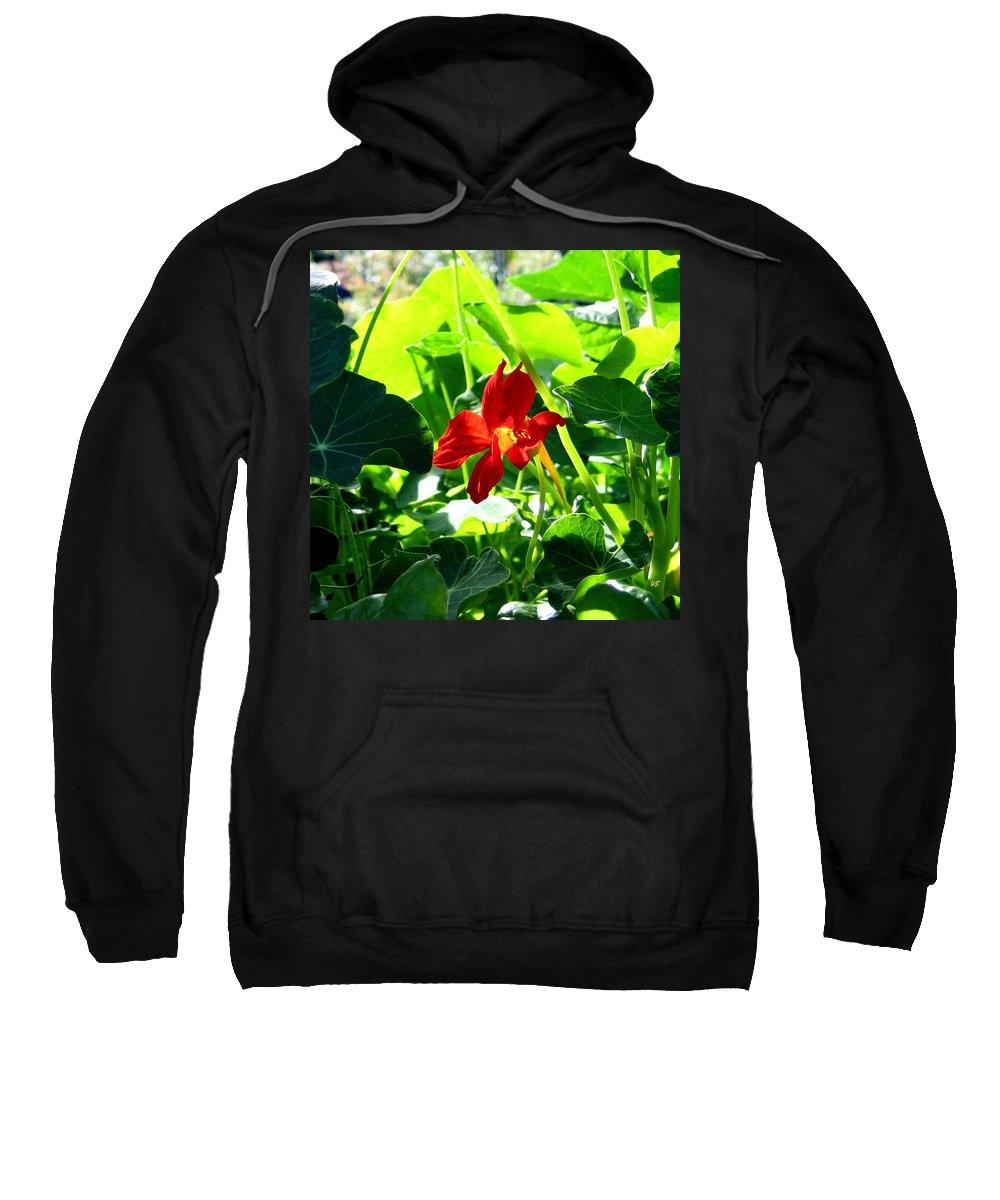 Nasturtium Sweatshirt featuring the photograph Lone Nasturtium  by Will Borden