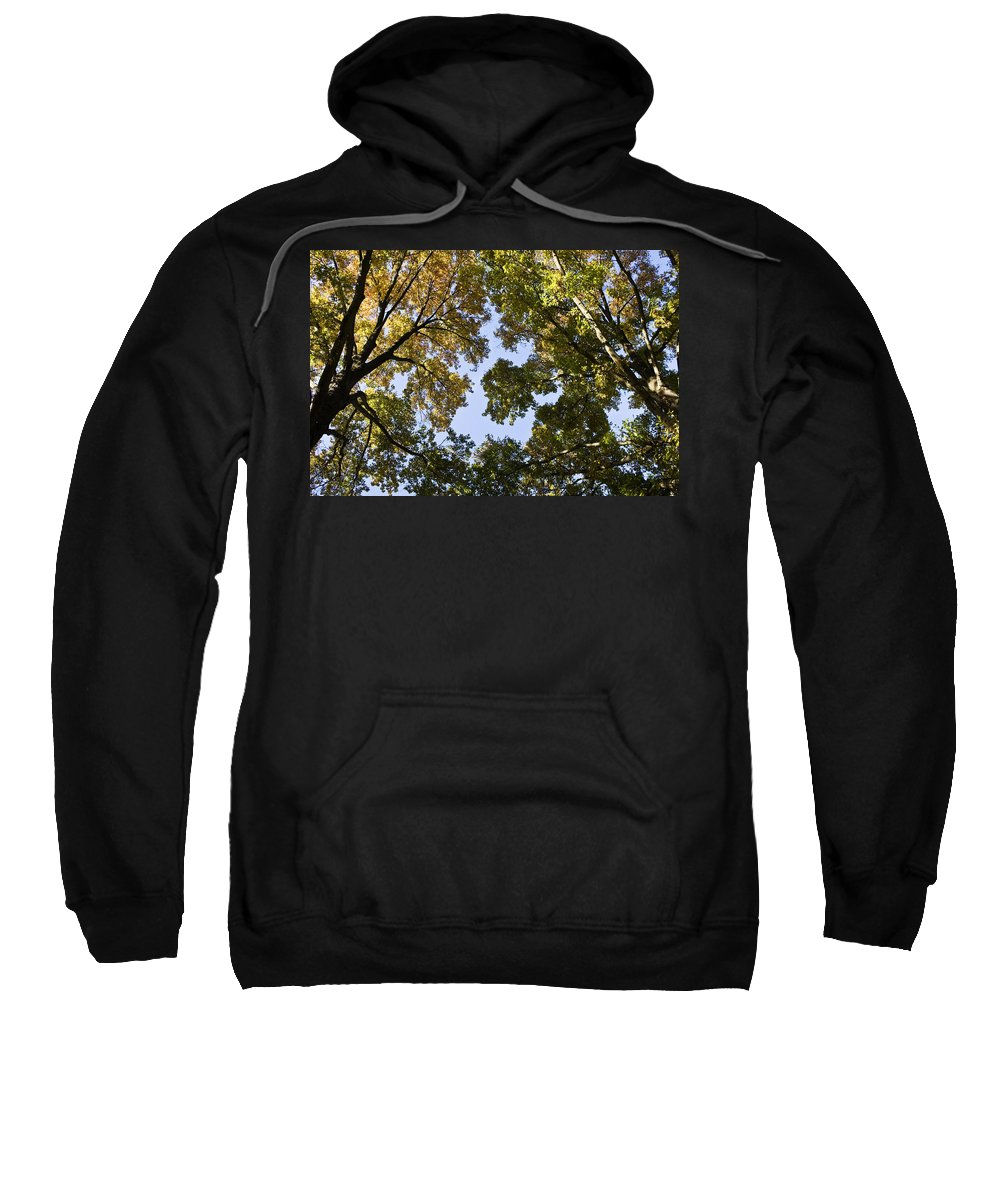 Fall Sweatshirt featuring the photograph Look Up by Teresa Mucha