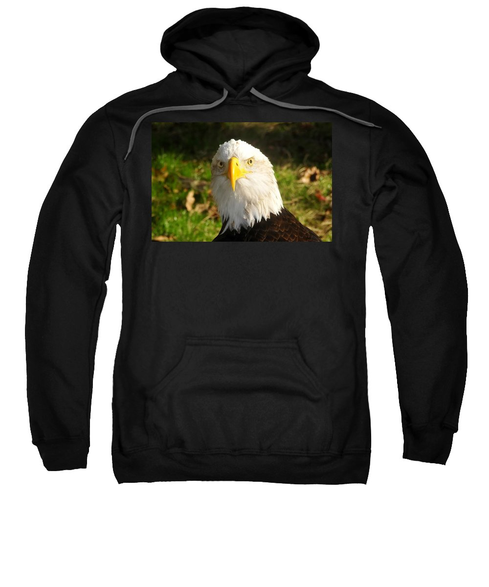 American Bald Eagle Sweatshirt featuring the photograph Looking Eagle by David Lee Thompson