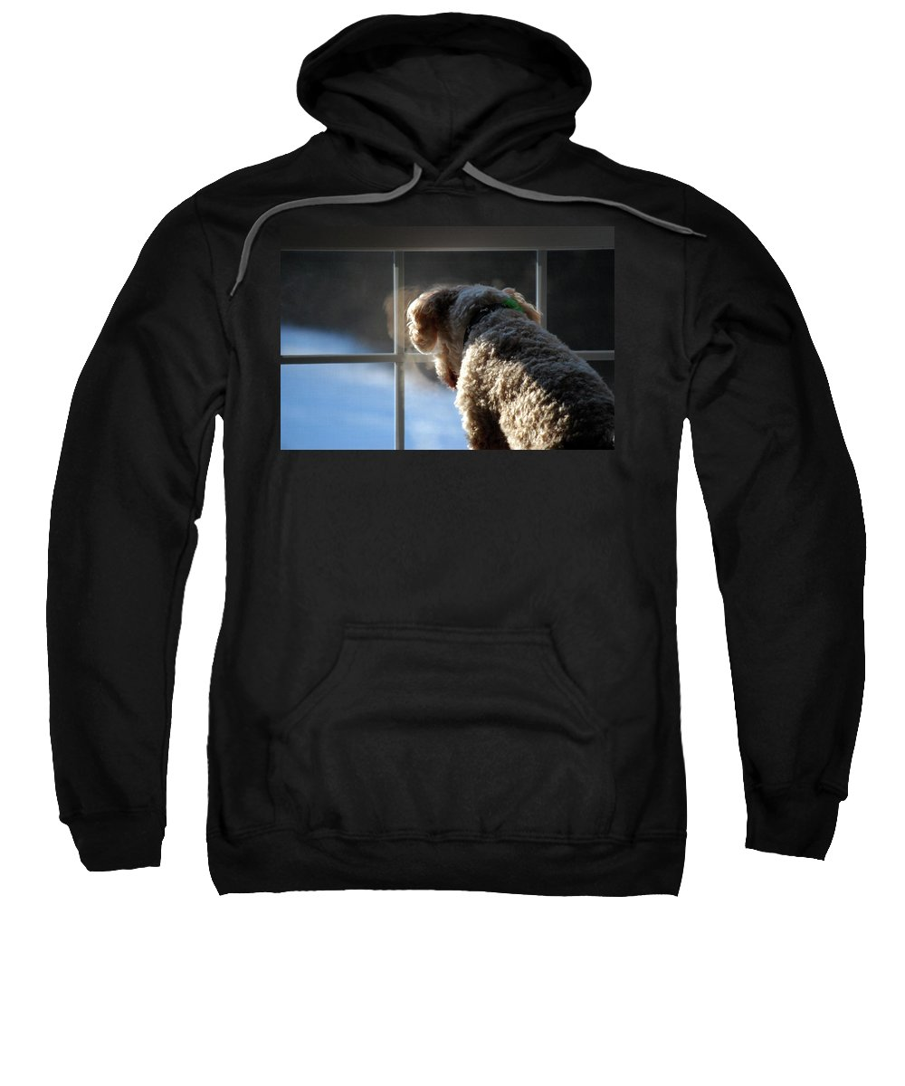 Dog Sweatshirt featuring the photograph Looking Outside by Lori Tambakis