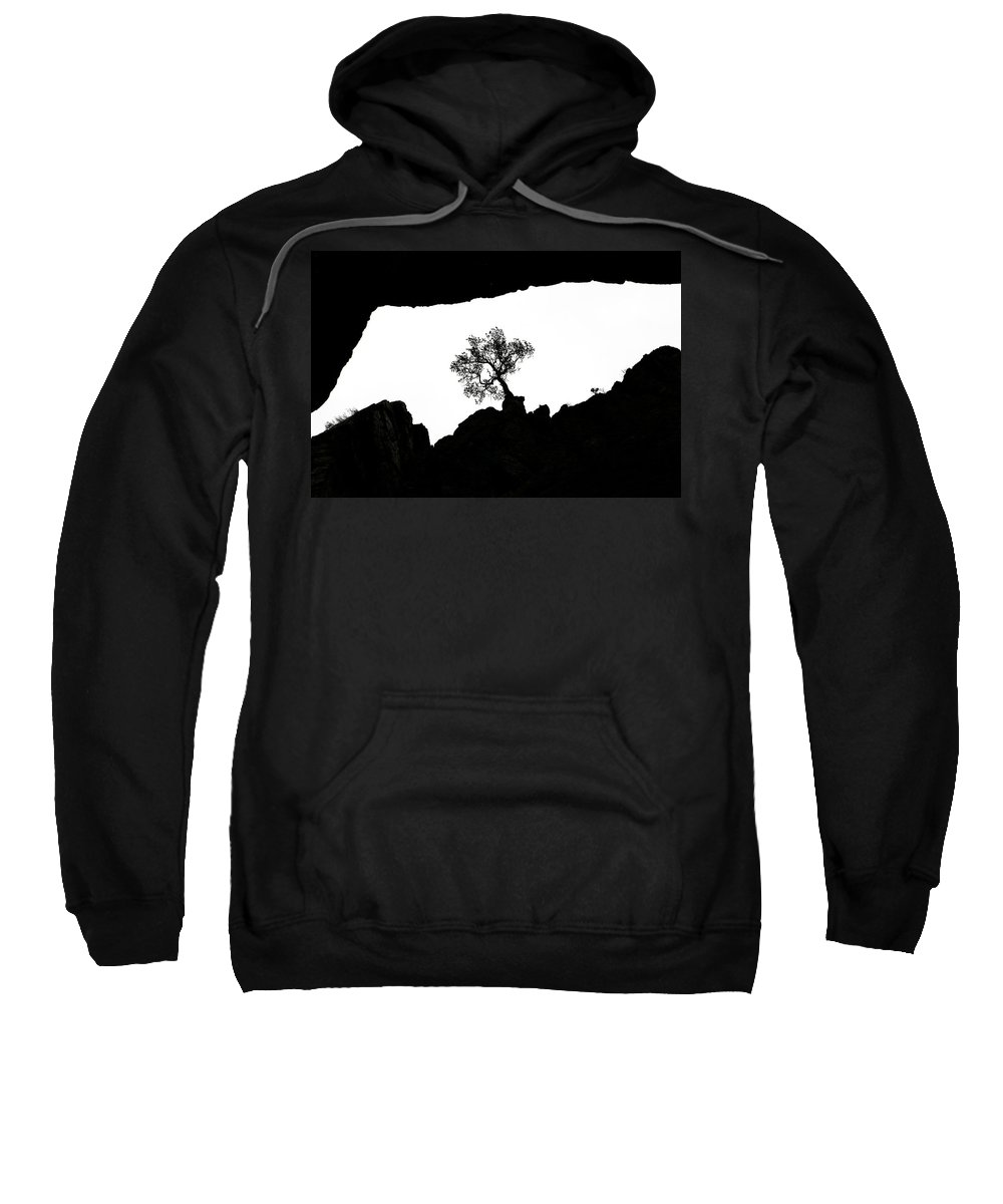 Tree Sweatshirt featuring the photograph Looking Up 2 by Marilyn Hunt