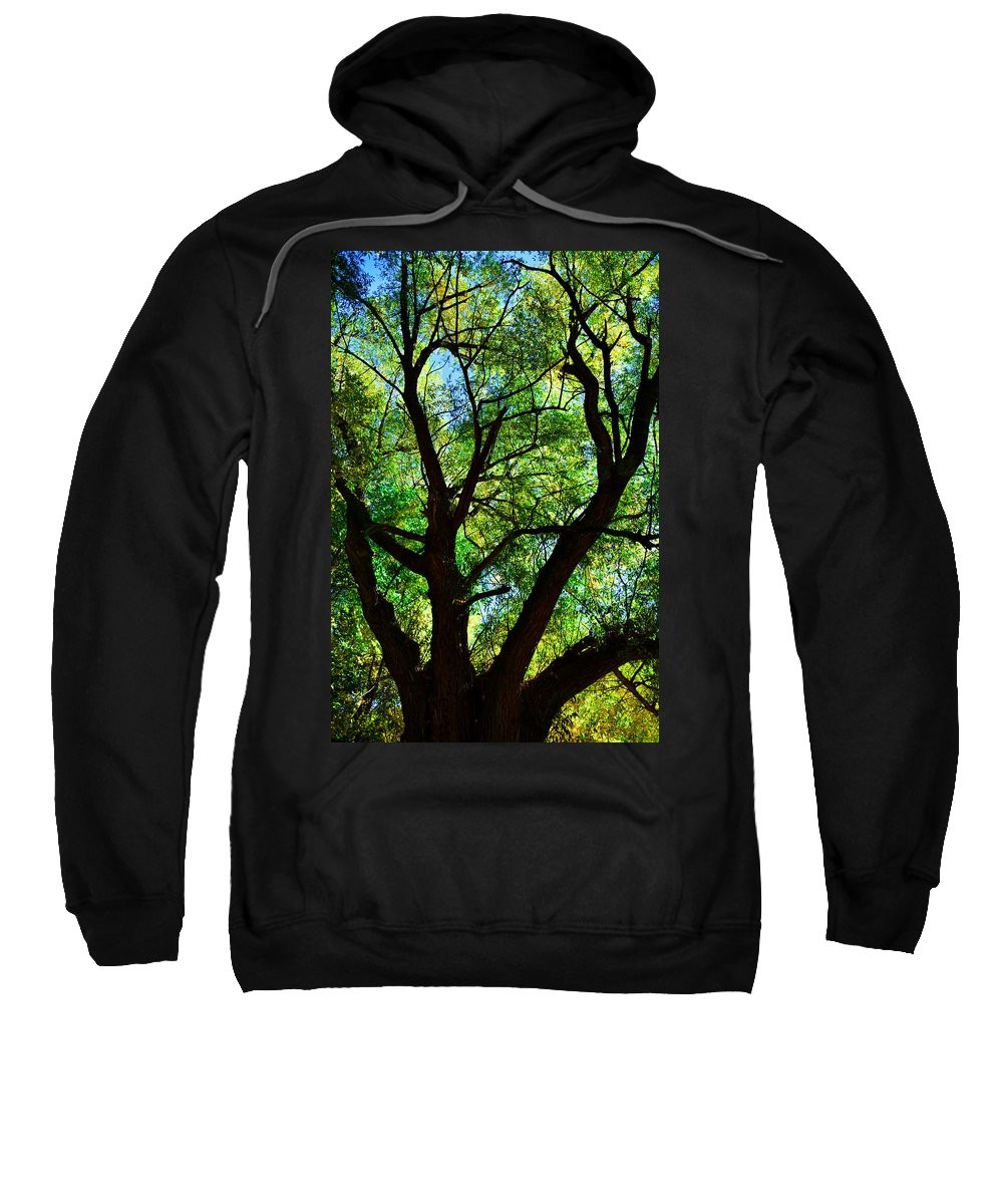 Trees Sweatshirt featuring the photograph Looking Up by Karl Unertl