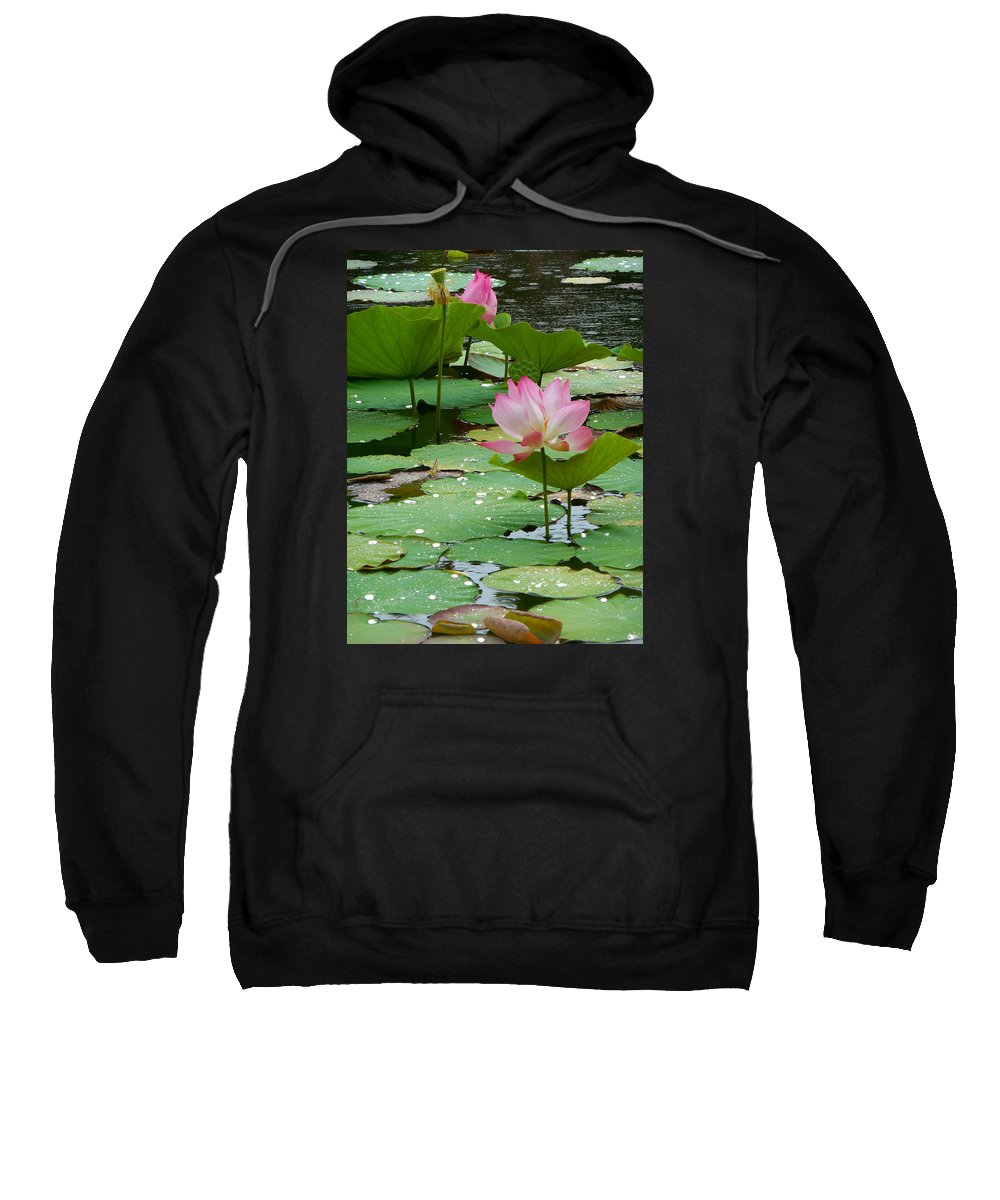 Lotus Flowers Sweatshirt featuring the photograph Lotus Pond #3 by Amber Barth