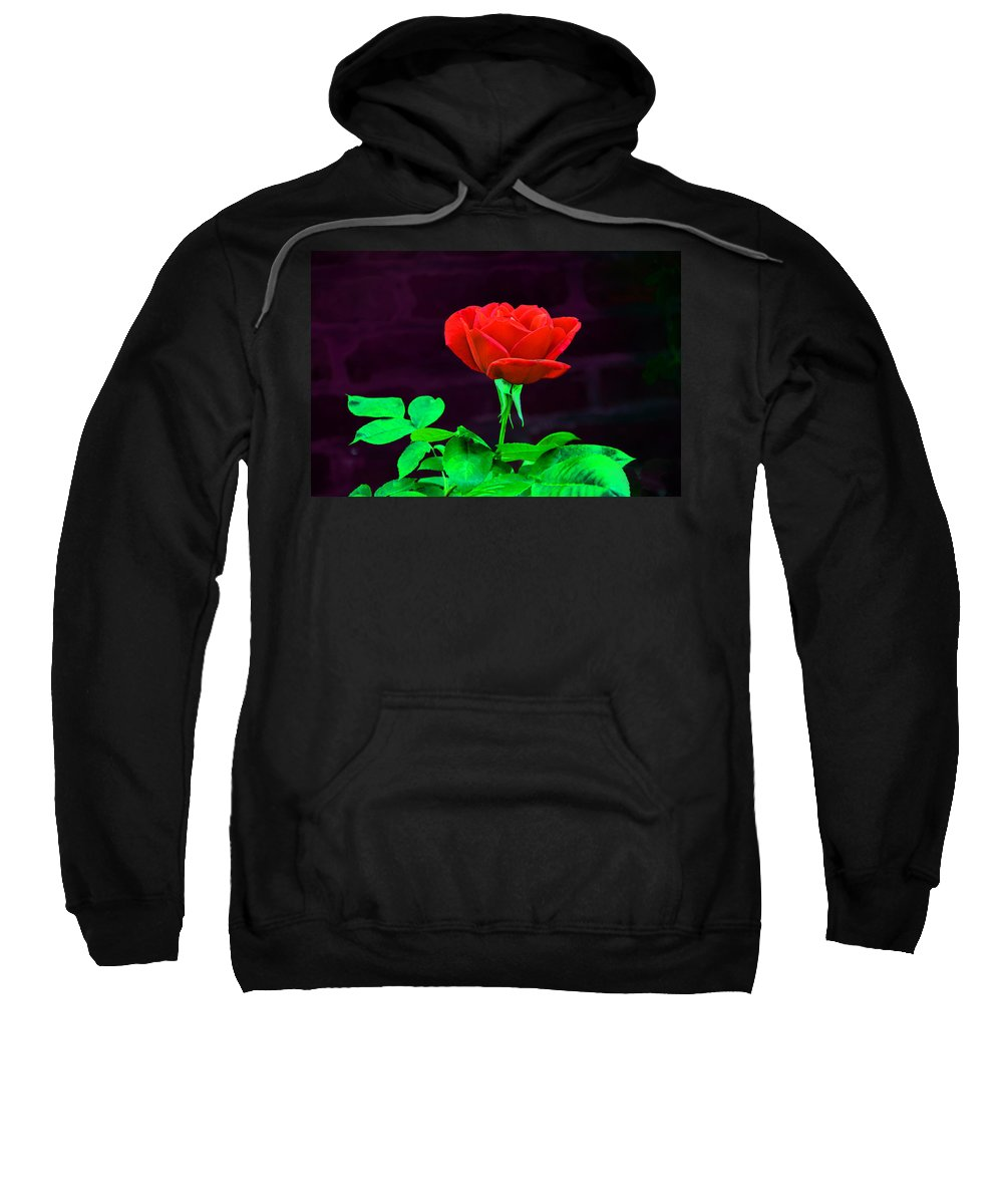 Rose Sweatshirt featuring the photograph Love Is A Rose by Bill Cannon