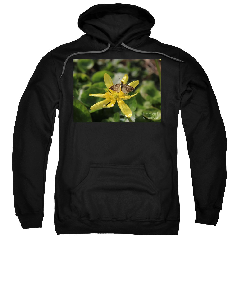 Mariposa Copper Butterfly Sweatshirt featuring the photograph Tasting Marsh Marigold by Jane Powell